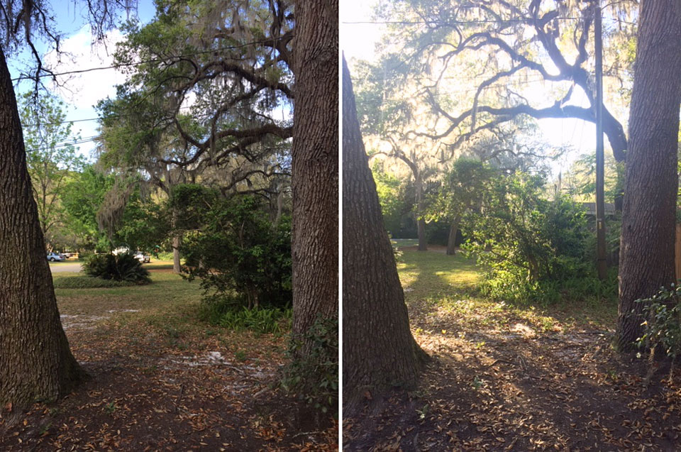 comparison of same spot in a yard two different times of day